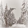Winter Wonderland - #1