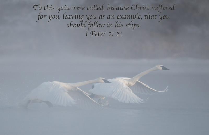 1 Peter 2: 21
