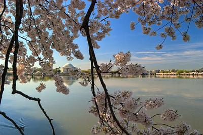 blossom | © ian sbalcio