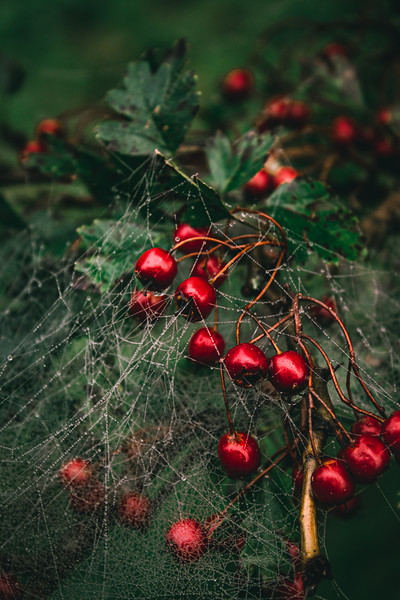 Entangled berries