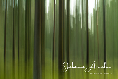 Pine trees in the green forest