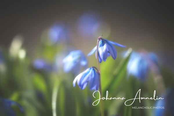 Ihana kevätpäivä ja pari sanaa tuotekopioista