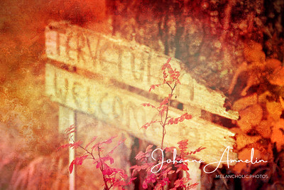Fiery Autumn:  Welcome sign and Midsummer rose