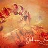 Fiery Autumn: mountain ash