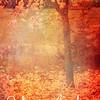 Fiery Autumn: Maple tree