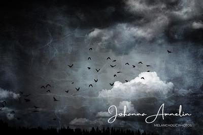 Birds and sky