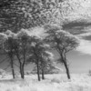 Nantucket moors, infrared