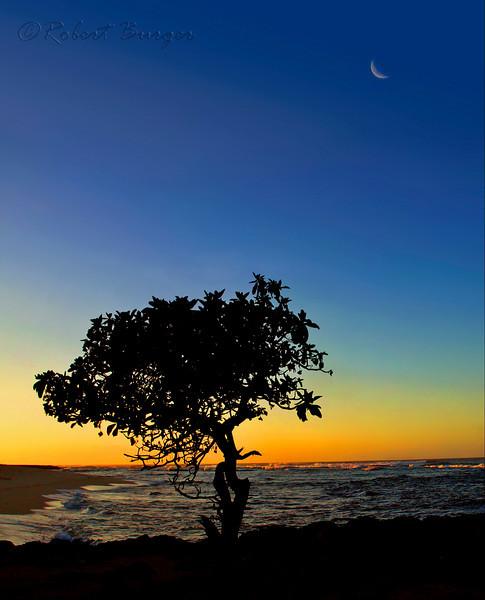 Turtle Bay, O'ahu, Hawaii