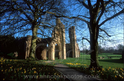 Glastonbury Abbey in Spring