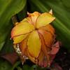 Fading Bloom - UW Botanical Garden 16