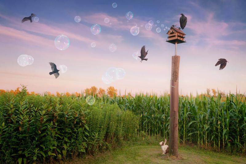 Dream Vultures (Don't Let Them Burst Your Bubble)