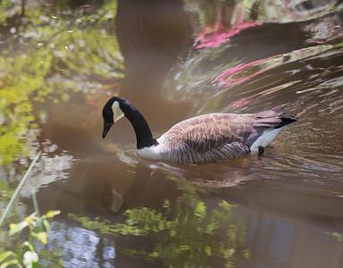 Reflective Goose