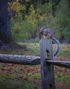 Squirrel's Autumn Acorn