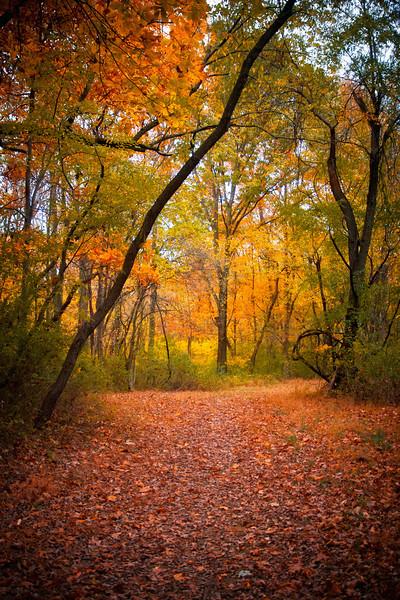 Autumnal Glow