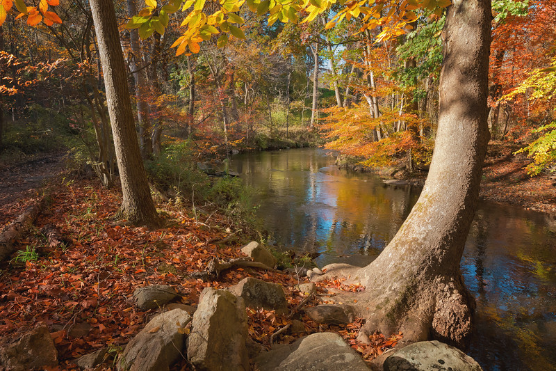 Pennypack Creek in Fall