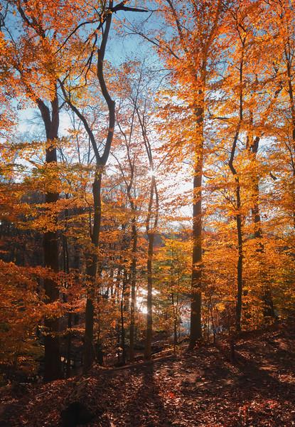Fall Filter