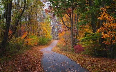 Through the Woods in Autumn