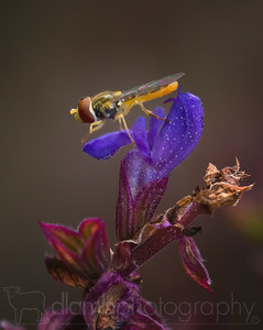 Hoverfly Plans its Next Move