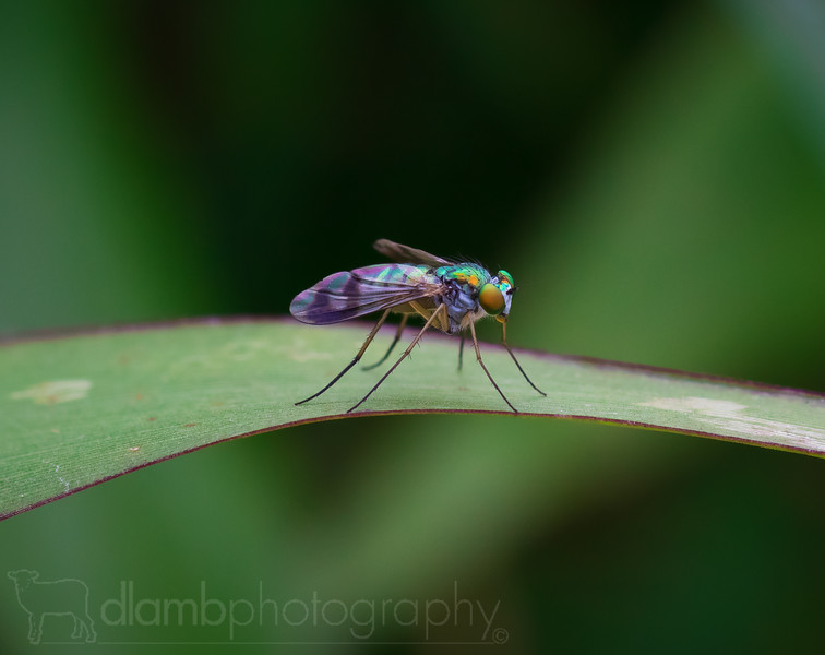 Spectral Fly