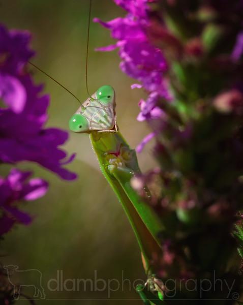 Surprised Mantis