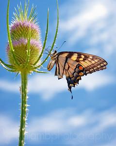 Rest the Weary Wings