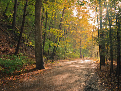 Taughannock Falls Gorge Trail in Autumn