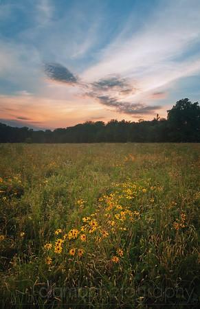 Sunset on Wildflowers