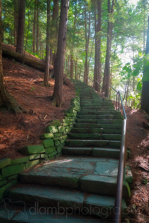 Forest Stairway at Taughannock Falls