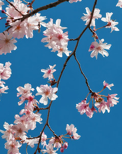 April Blooms