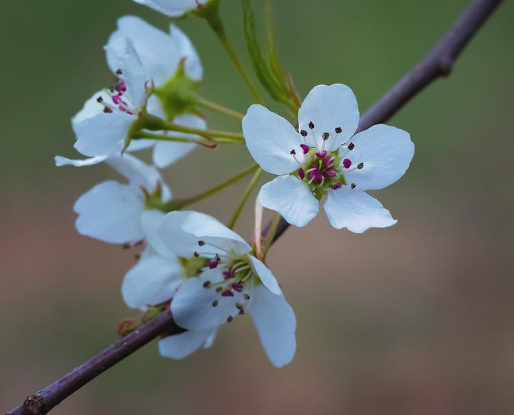 Almost Forgot Spring