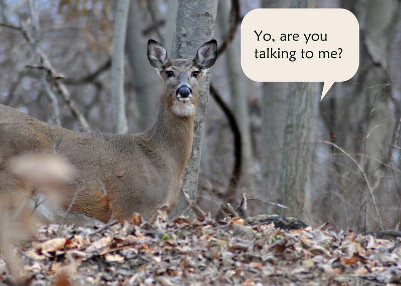 bambi w tude