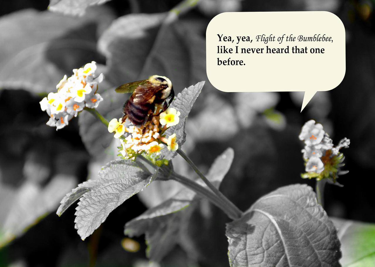 buzz w tude