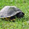 Turtle 80314-315