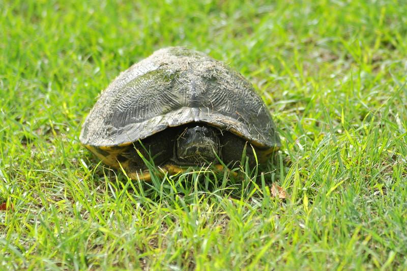 turtle 80314-322