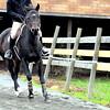 galloping horse 102211_0975