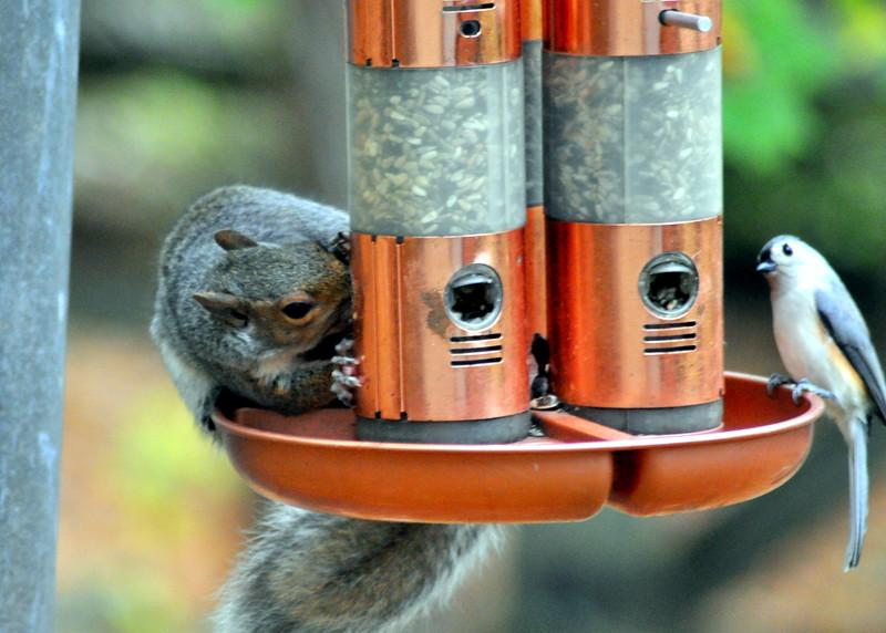 SQ + Bird feeder