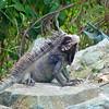 lizard st john 041406 03103