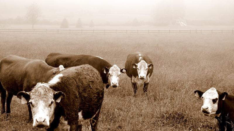 Ladies of the Pasture