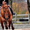 galloping horse 102211_0211
