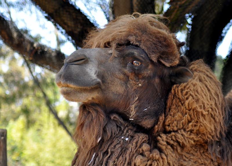 woolly camel 41614_0467
