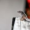 lizard 030115_0503