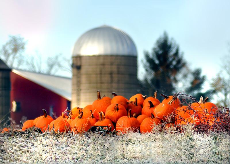 pumpkins 103114_0437 4