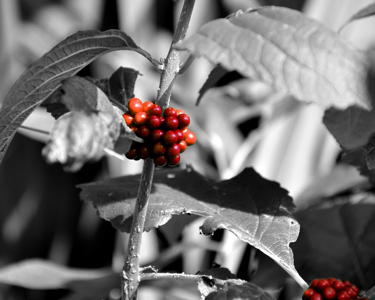 rust berries