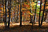 forest 102315_0093