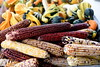 indian corn 100615 328