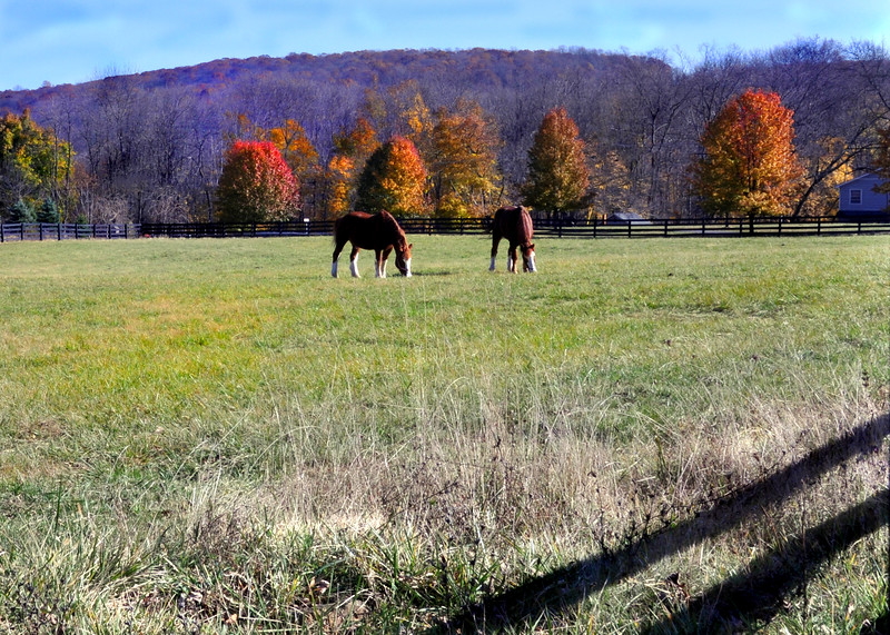 horses 111014_0698 2