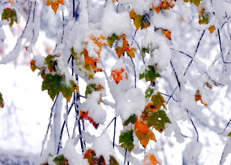 leaf snow 102911 10 2