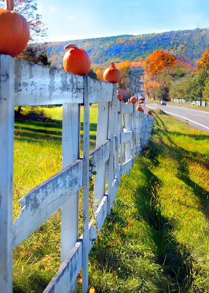 pumpkin MCH 101909 195271 3