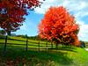 Tree Autumn MCH 101013 101147-1