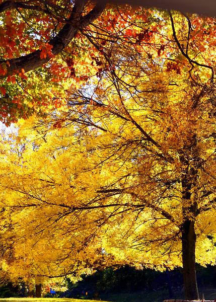 tree yellow 101015 _8649 2